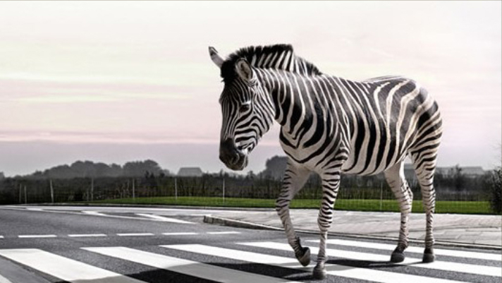 What's The Difference Between Zebra, Puffin And Pelican Crossings 5